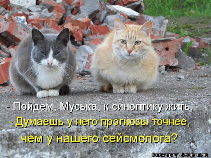 kotomatritsa_4F (700x524, 82Kb)