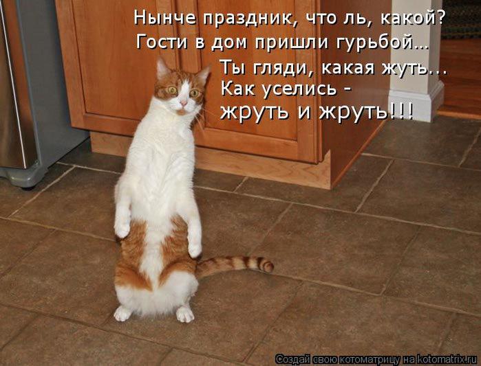 kotomatritsa_c (700x533, 60Kb)