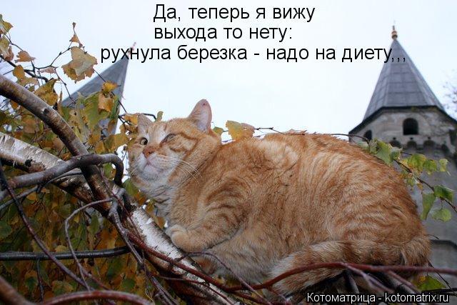kotomatritsa_K (640x427, 59Kb)