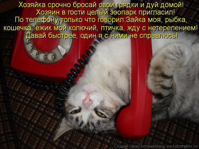 kotomatritsa_NK (700x524, 75Kb)