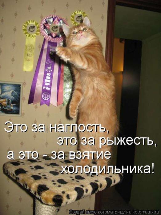 kotomatritsa_U4 (523x700, 57Kb)
