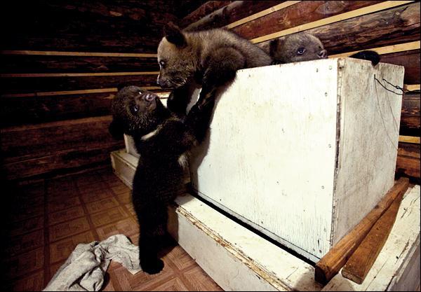 медвежата 04 (600x417, 45Kb)