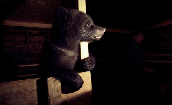 медвежата 08 (600x365, 17Kb)