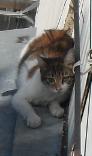Кошка думает что хорошо устроилась (92x156, 29Kb)