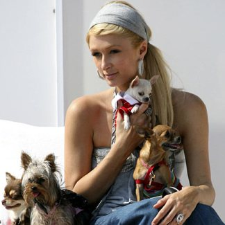 parishilton1BIG0108_468x433 (324x325, 21Kb)