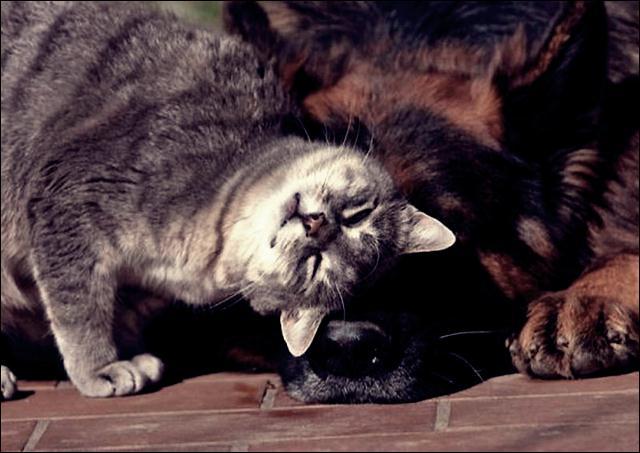 animal friends 04 (640x453, 45Kb)