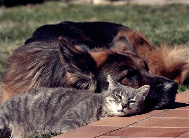 animal friends 10 (640x470, 47Kb)