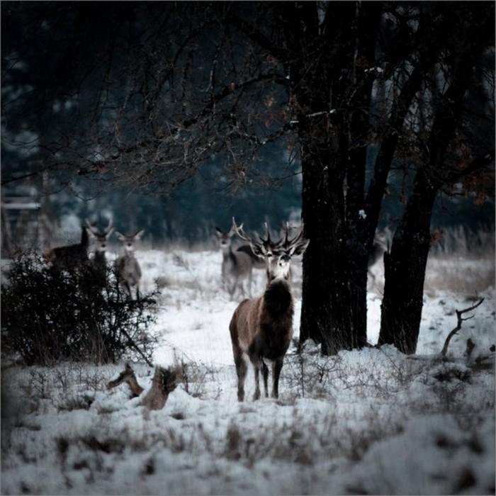 Сказочные фото-пейзажи от Nicolas LB 4 (700x700, 112Kb)