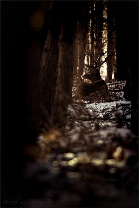 Сказочные фото-пейзажи от Nicolas LB 20 (467x700, 219Kb)