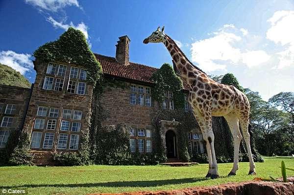 поместье жирафов в кении/4552399__1_ (600x399, 45Kb)