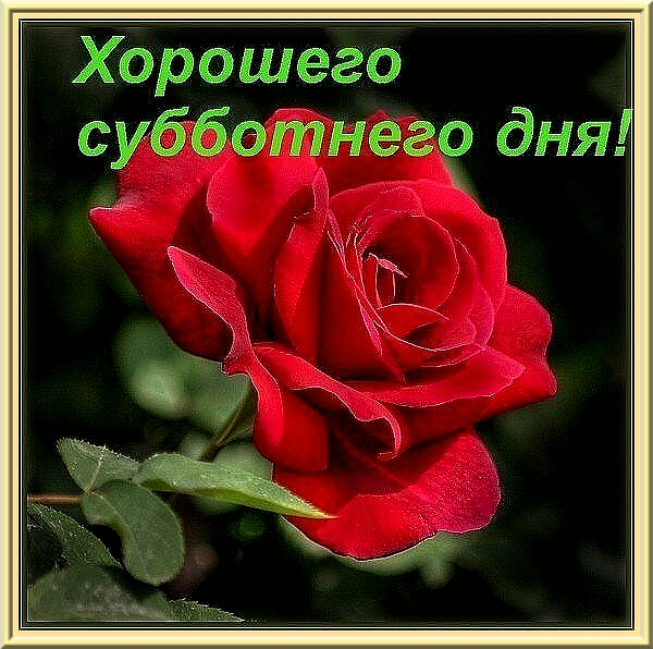 49704640_0_2bf9e_165ee14_XL (600x596, 269Kb)