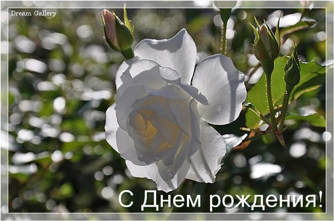 3303834_wr_24 (650x431, 112Kb)