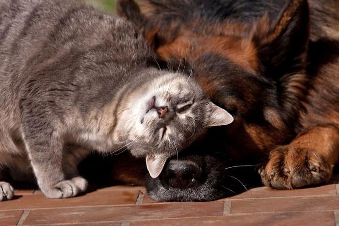 кошка с собакой фото 1 (700x466, 133Kb)
