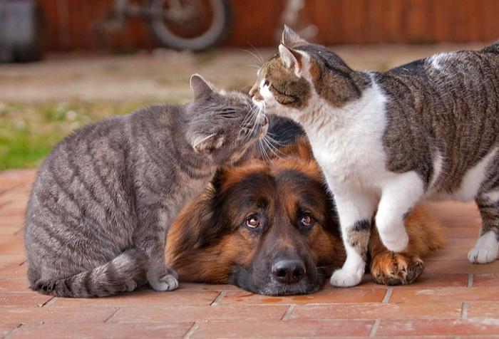 кошка с собакой фото  6 (700x476, 139Kb)