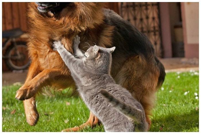 кошка с собакой фото  7 (700x466, 142Kb)