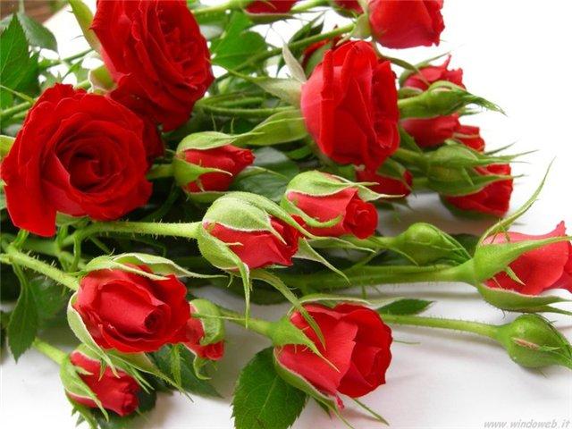 http://img0.liveinternet.ru/images/attach/c/6/90/388/90388500_BUKET_ALUYH_ROZ.jpg