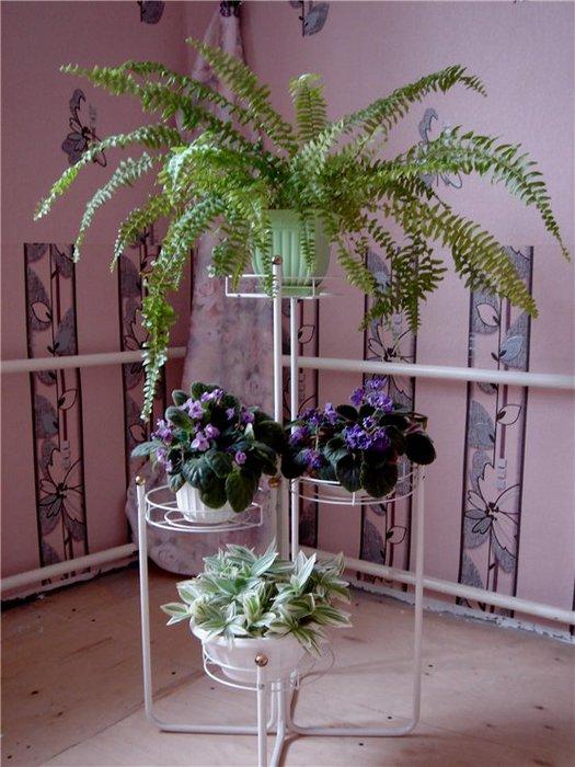 Дизайн цветов в квартире фото