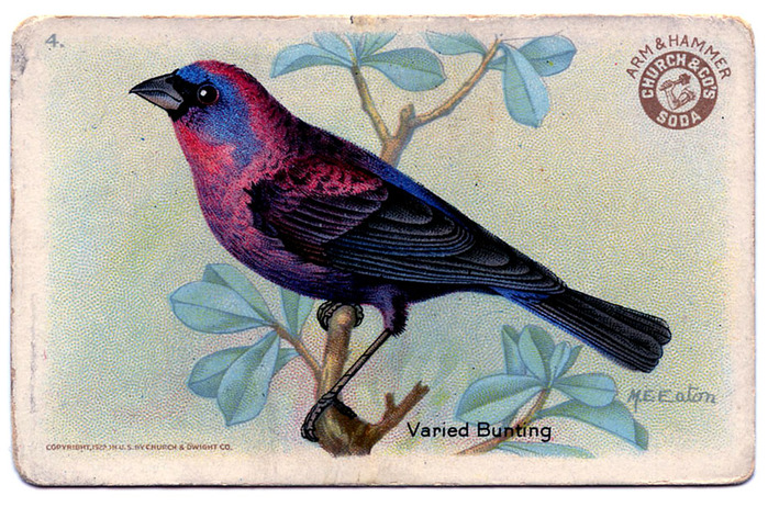bird bunting vintage image graphicsfairy006b (700x462, 190Kb)