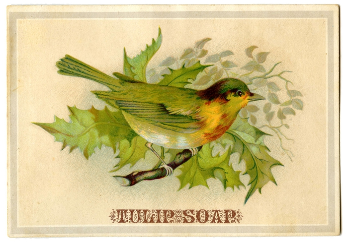 bird holly vintage image graphicsfairy004b (700x496, 275Kb)