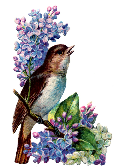 birds and flowers vintage image graphicsfairy3b (475x700, 211Kb)