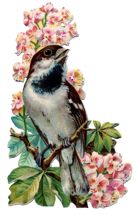 birds and flowers vintage image graphicsfairy5b (451x700, 207Kb)