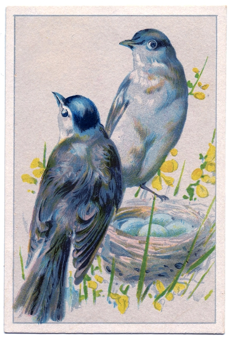 Birds-BlueEggs-vintageimage-Graphics-Fairy (472x700, 285Kb)