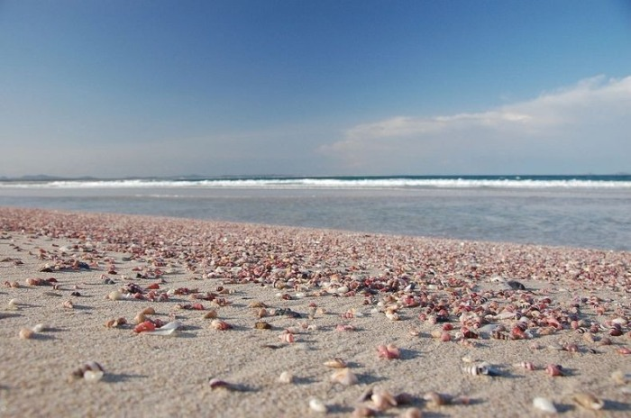 3925073_shellbeach5 (700x464, 87Kb)