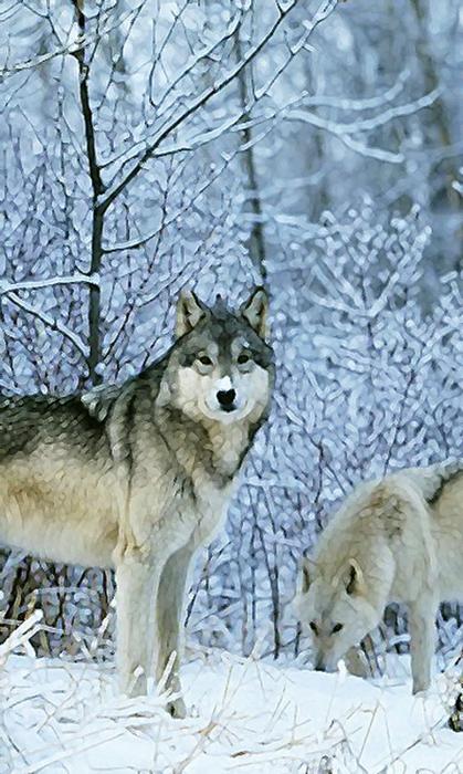 1.116_resolution_240x400_116_winter_wolfes_m (419x700, 276Kb)