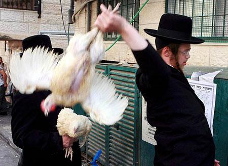 Евреи и петухи (450x328, 44Kb)