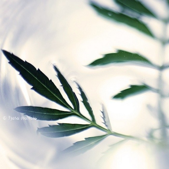 Нежное макро-фото от фотографа Tjasa Maticic 20 (700x700, 71Kb)