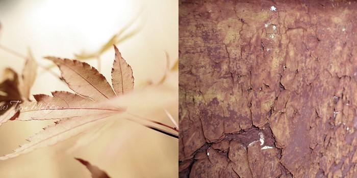 Нежное макро-фото от фотографа Tjasa Maticic 22 (700x350, 62Kb)