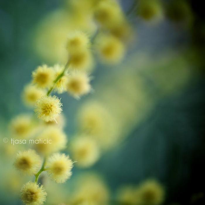 Нежное макро-фото от фотографа Tjasa Maticic 28 (700x700, 49Kb)