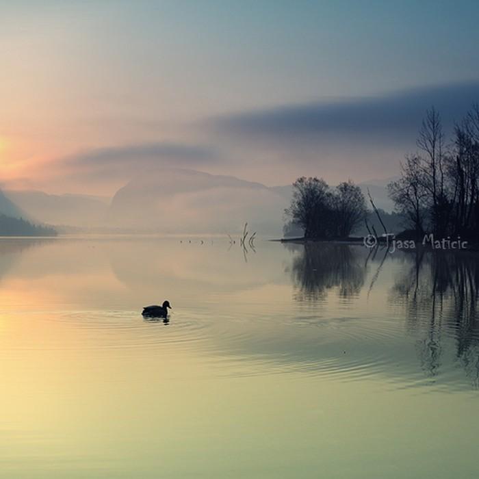 Нежное макро-фото от фотографа Tjasa Maticic 30 (700x700, 58Kb)
