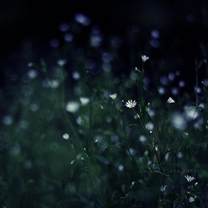 Нежное макро-фото от фотографа Tjasa Maticic 38 (700x700, 79Kb)