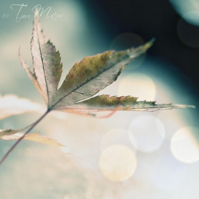 Нежное макро-фото от фотографа Tjasa Maticic 54 (700x700, 55Kb)