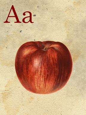 a flashcard - sweetly scrapped (288x384, 109Kb)