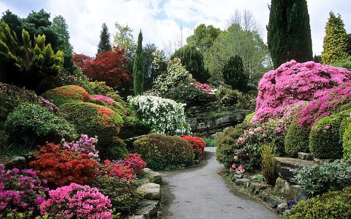 Leonardslee Gardens (Леонардсли – Гарденз) 04.jpgСад Леонардсли, Англия (700x437, 230Kb)