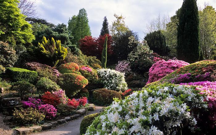 Leonardslee Gardens (Леонардсли – Гарденз) 09.jpgСад Леонардсли, Англия (700x437, 204Kb)