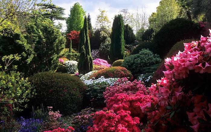 Leonardslee Gardens (Леонардсли – Гарденз) 12.jpgСад Леонардсли, Англия (700x437, 207Kb)