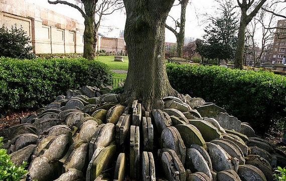 дерево с надгробиями (570x362, 244Kb)