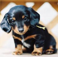 собака (203x200, 8Kb)