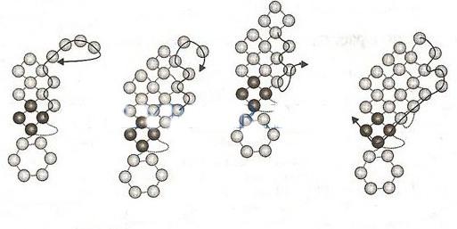 Kole-Polevye-cvety-ch2 (513x257, 41Kb)