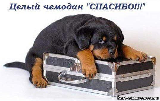 чемодан спасибо (538x342, 38Kb)
