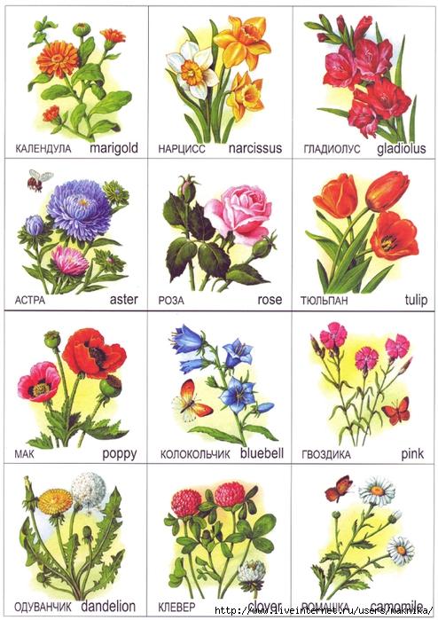 Садовые цветы и растения с названиями и фото