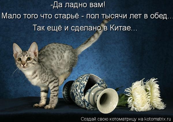 kotomatritsa_1A (600x425, 46Kb)