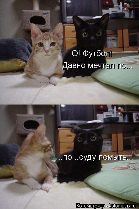 kotomatritsa_lv (467x700, 46Kb)