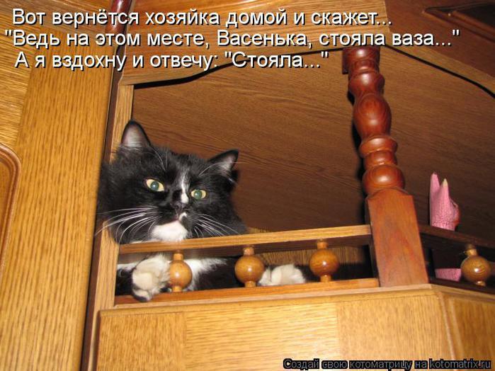 kotomatritsa_MQ (700x524, 68Kb)