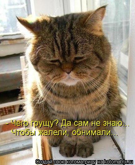 kotomatritsa_qi (435x530, 56Kb)