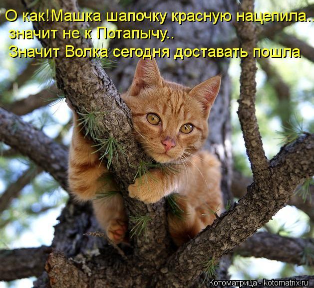 kotomatritsa_vF (629x578, 80Kb)