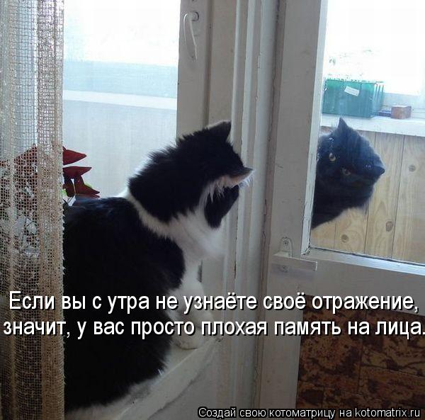 kotomatritsa_Y (600x593, 59Kb)